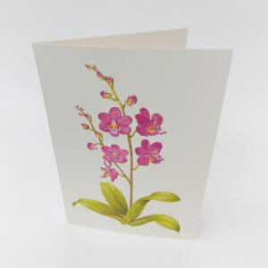 Paula Skene Designs Orchid condolence card
