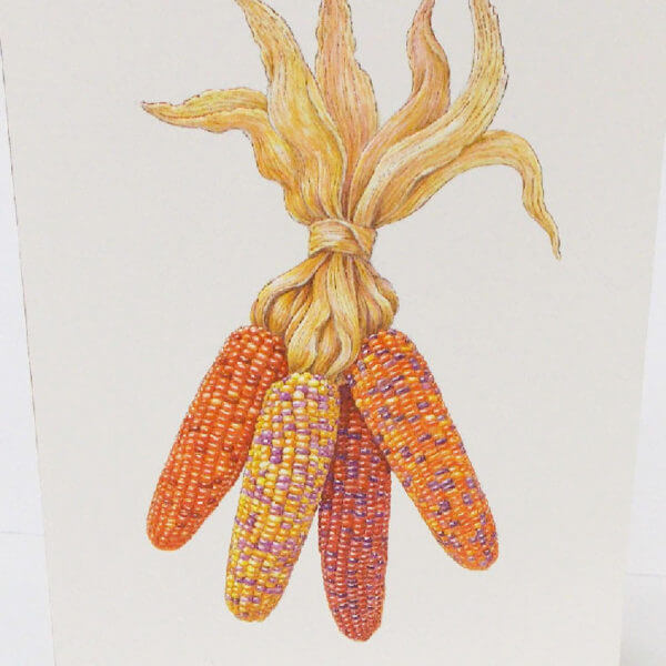 indian corn Thanksgiving card closeup1000 pixels