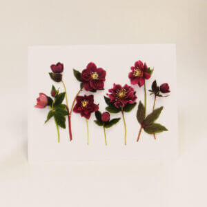 Bottle Branch® note cards – Hellebore Party