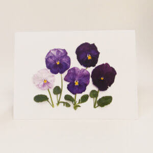 Bottle Branch® Purple Pansies note card