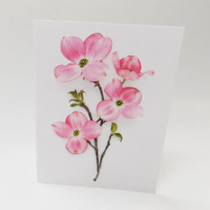 Bottle Branch® note card – Dogwood