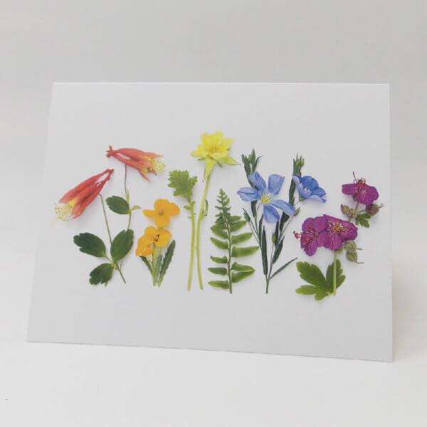 Summer Flower Rainbow 1000 pixels
