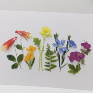 Bottle Branch® note card – Summer Flower Rainbow